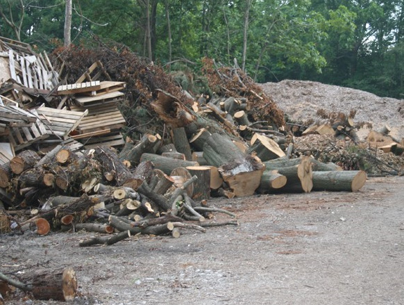 Mixed Biomass